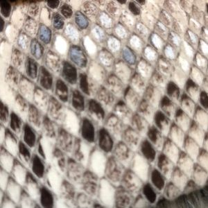 Ann Taylor Bags - Ann Taylor Olli Exotic Clutch